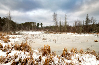 Beaver pond in the Blue Hills 1
