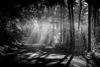 Magical summer forest 3, B&W