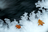 Ice and oak leaves