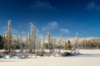 Frosty landscape, sunny day - Audie Lake 1