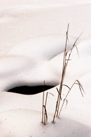 Grass in snow 1