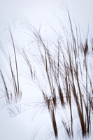 Grass in snow 5
