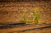 Grass in sand 3