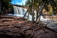 Cedar trees with Gooseberry Falls with bridge