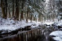 Hemlock Trees at creek with snow