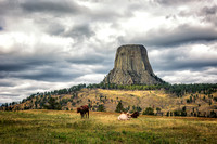 Devils Tower with longhorn cattle