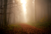 Fog in Forest, Germany 1