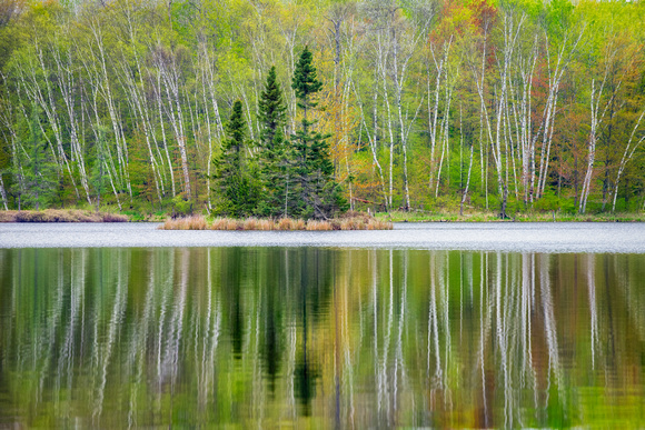 Spring trees reflecting, 3 Spruce Island
