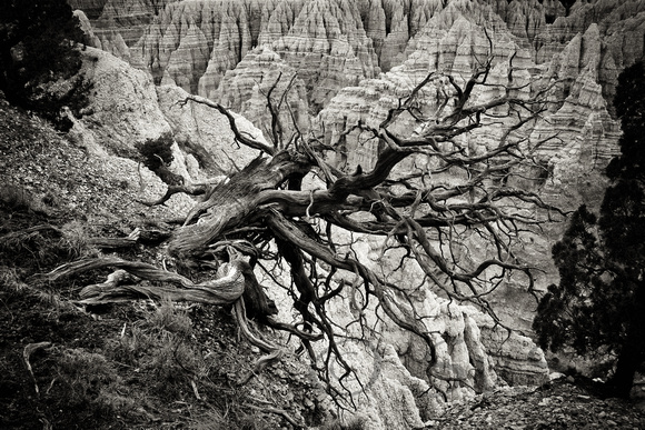 Dead Tree in Badlands, bw