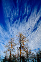 Black Hills, trees & clouds 1
