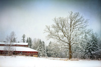 Oak tree & barn with hoarfrost