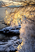 Ice covered tree at sunset