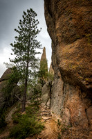 Along the Needles Highway