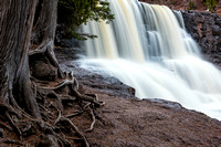 Gooseberry Falls with tree roots, close up