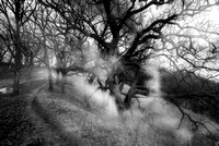 Spirit of the Oak trees 3