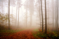 Fog in Forest, Germany 2