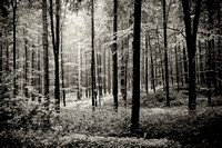 Forest Germany, bw